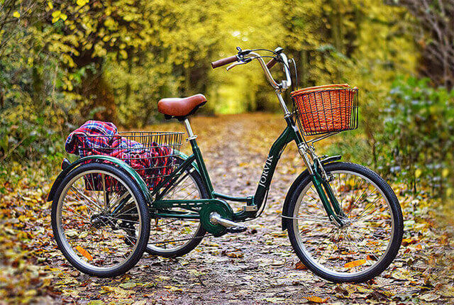 Tricycle in the Woods